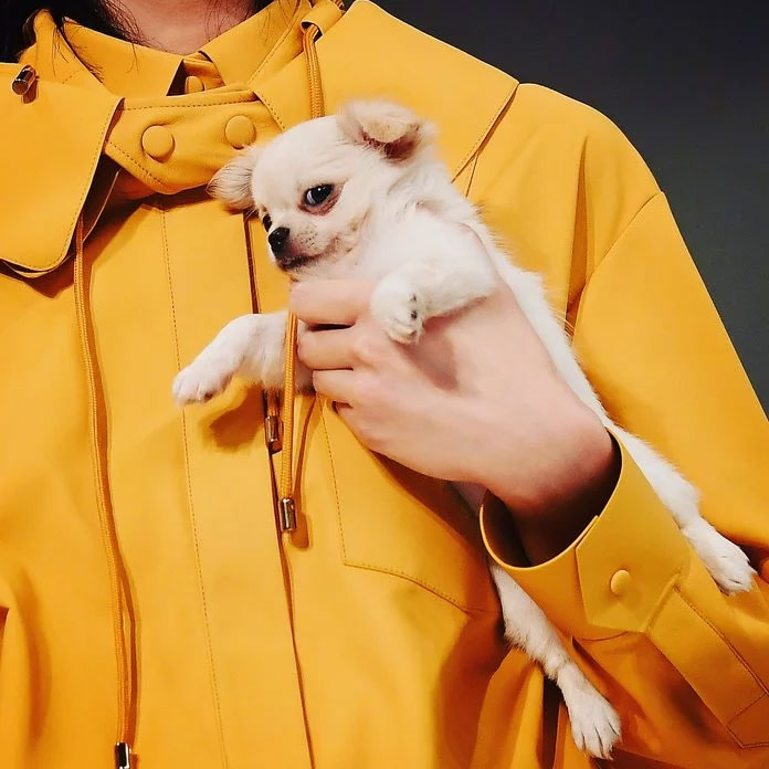 A Puppy at Tod's